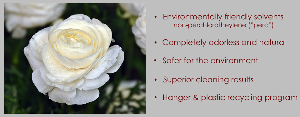 Environmental Dry Cleaning Rose